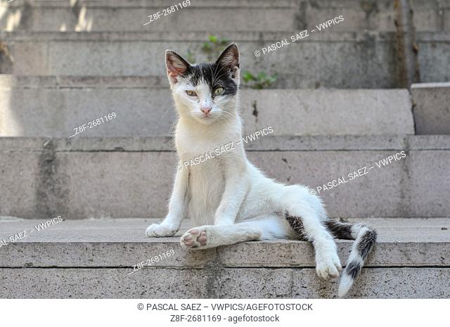 A street cat rests in the shade on some steps