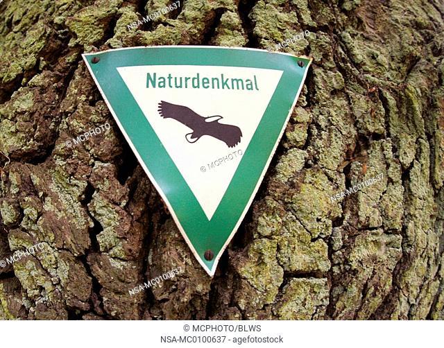 Quercus robur, common oak, pedunculate oak, English oak