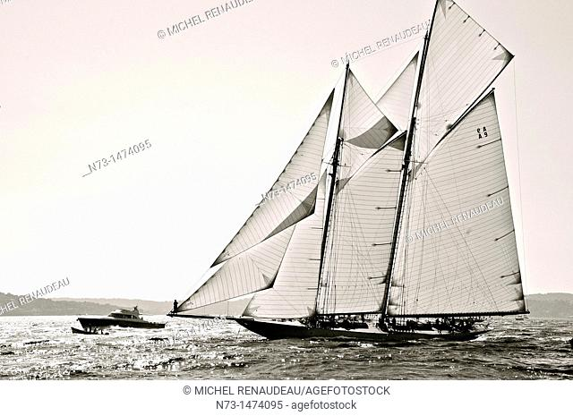 France, Var 83, Saint-Tropez, Les Voiles de Saint-Tropez meet every year in late September of beautiful classic yachts competing in regattas superb here gaff...