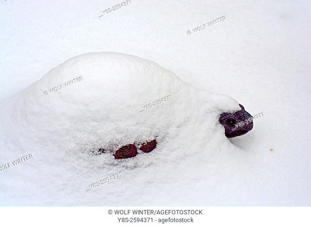 Turtle Sculpture covered by Snow