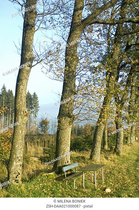 Wooden bench and table outdoors in rural area