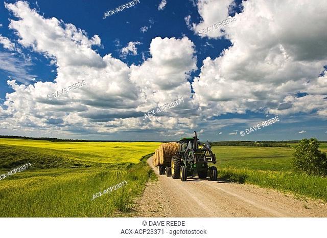 Tractor carrying forage crop rolls through farmland. Tiger Hills, Manitoba, Canada