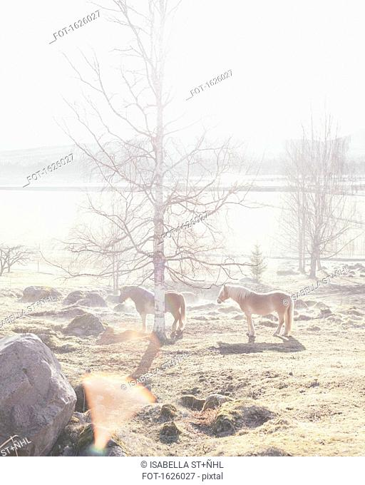 Horses standing by bare tree in field