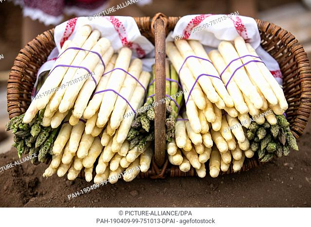 09 April 2019, Bavaria, Obermichelbach: During the opening of the Bavarian asparagus season, green and white asparagus is in a basket