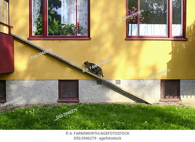 STOCKHOLM, SWEDEN Catwalk. Housecat has special walkway from balcony