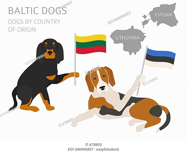 Dogs by country of origin. Baltic dog breeds. Infographic template. Vector illustration