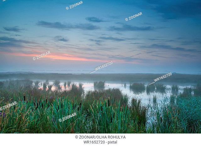 summer misty sunrise over bog