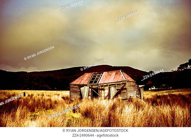 Typical Australian rural architecture of a collapsing old wooden farm building in long dry grassland. Taken; Bruny Island, Tasmania, Australia