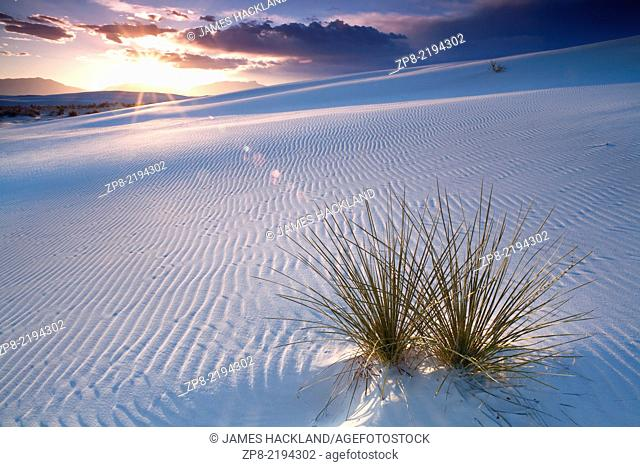 A Yucca plant pokes through the sand during a colourful sunset at White Sands National Monument at sunset near Alamogordo, New Mexico, USA