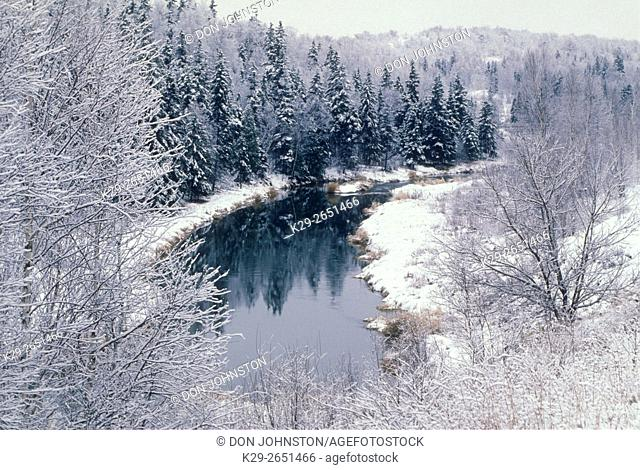 Fresh snow on trees along open section of Junction Creek in early winter, Lively, Ontario, Canada
