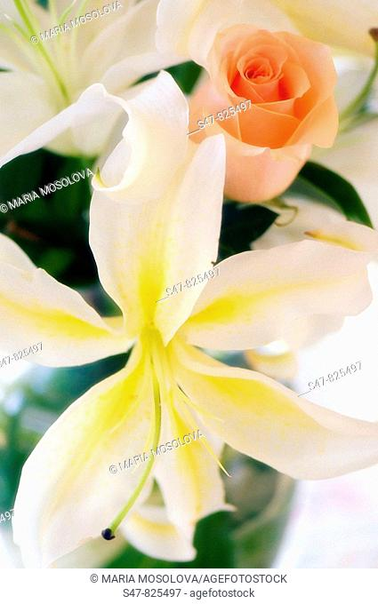 White Oriental Lilies and Pink Rose. Flower Bouquet