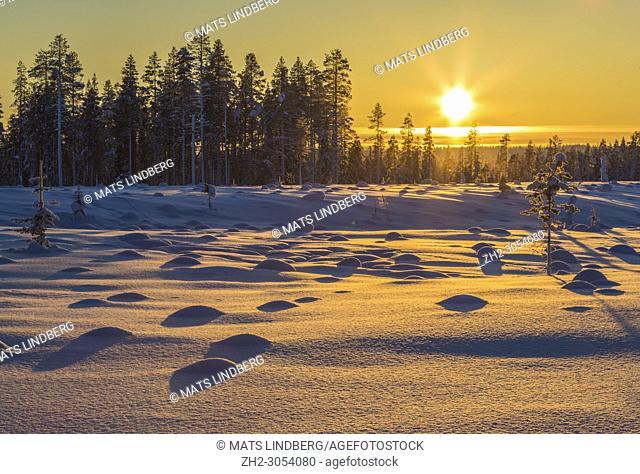 Winter landscape in direct light at sundown, Gällivare county, Swedish Lapland, Sweden