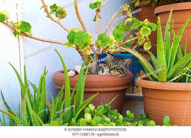Cat sleeping in bough-pot in Crete, Greece