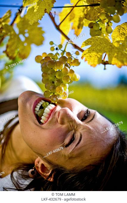 Woman eating wine grapes, Styria, Austria