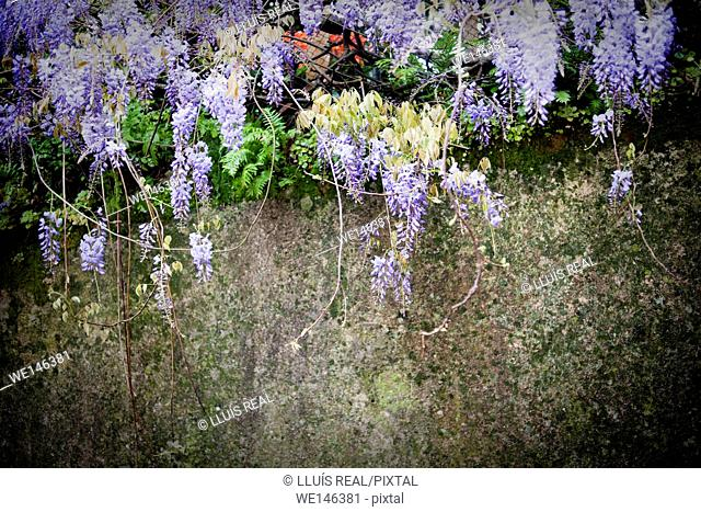 SINTRA, PORTUGAL, GARDEN WITH FLOWERS