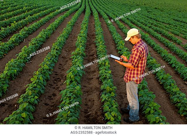 Agriculture - A young farmer in an early growth soybean field records crop data on his Apple iPad. This represents the next generation of young farmers using...