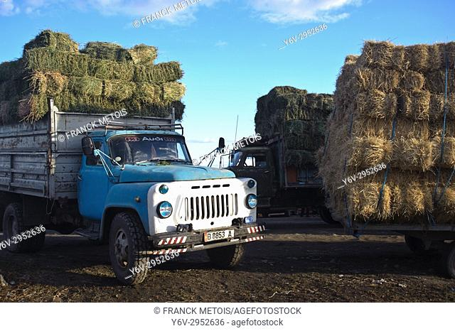 Trucks carrying fodder. The blue one is a GAZ 53 truck, Gaz being a soviet carmaker. The GAZ 53 truck has been produced between 1961 and 1993