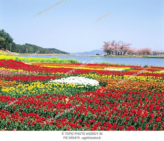 Flowers,Namhae,Gyeongnam,Korea