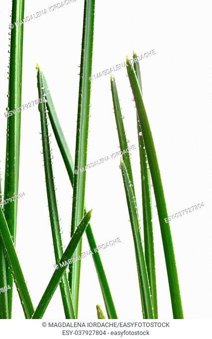 Green wet grass with dew on blades