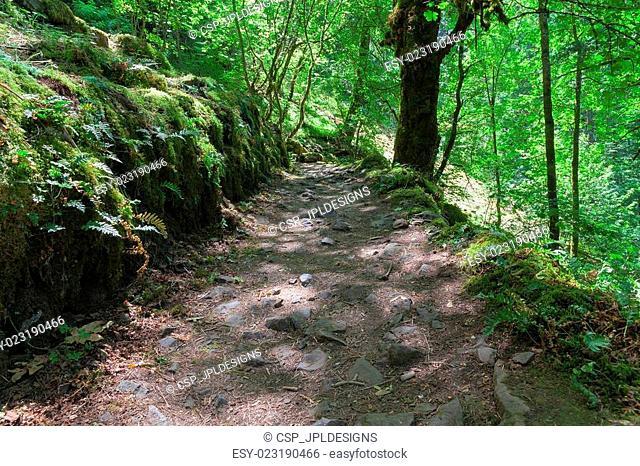 Hiking Trail in Columbia River Gorge