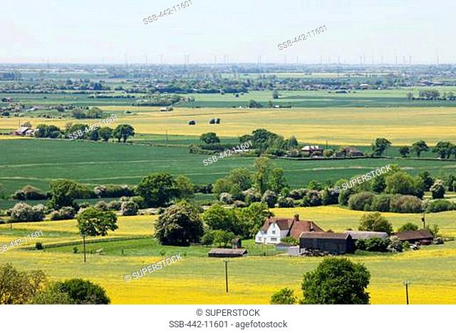 UK, England, Kent, Romney Marsh, view of farm houses and fields