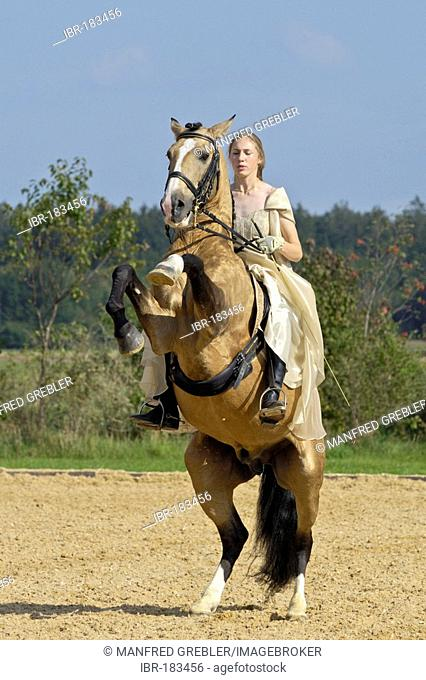 Girl wearing a historic dress on a rearing Lusitano horse stallion (circus exercise)