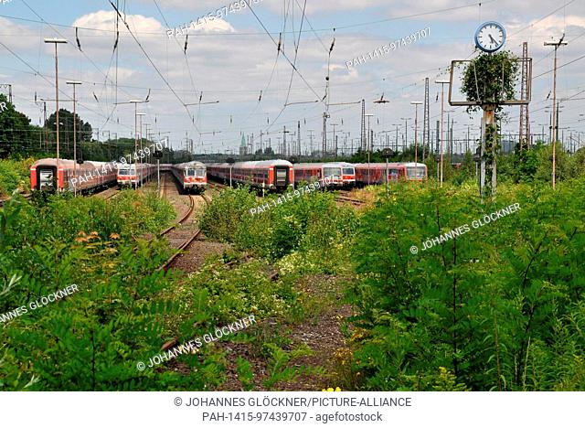 Overgrown railroad marshalling yard on 22.07.2012 with trains for sale in Hamm - Germany. | usage worldwide. - Hamm/Nordrhein-Westfalen/Germany