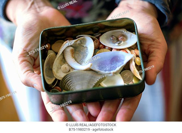 hands showing a box full of sea shells