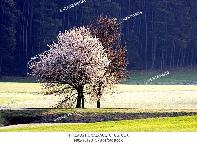 Spring morning in hoar frost - Bavaria/Germany