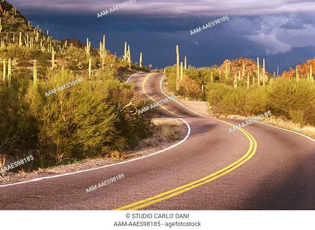 Highway - Saquaro Natl Mon. Arizona