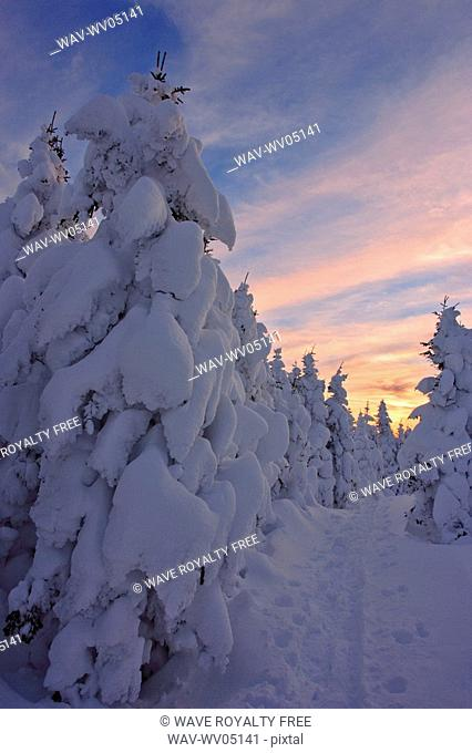 View of path and snow-covered trees at Pic de l'aube, Quebec, Canada