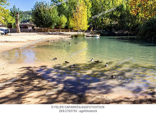 Recreation area on the River Jucar, Some ducks swim in the water, take in Alcala of the Jucar, Albacete province, Spain