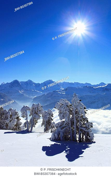 view from Niederhorn to Dreigestirn, Eiger, Moench and Jungfrau, Switzerland, Bernese Alps