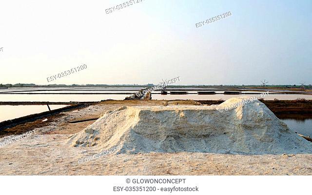 flower of sea salt in salt farm, salt field with morning sun