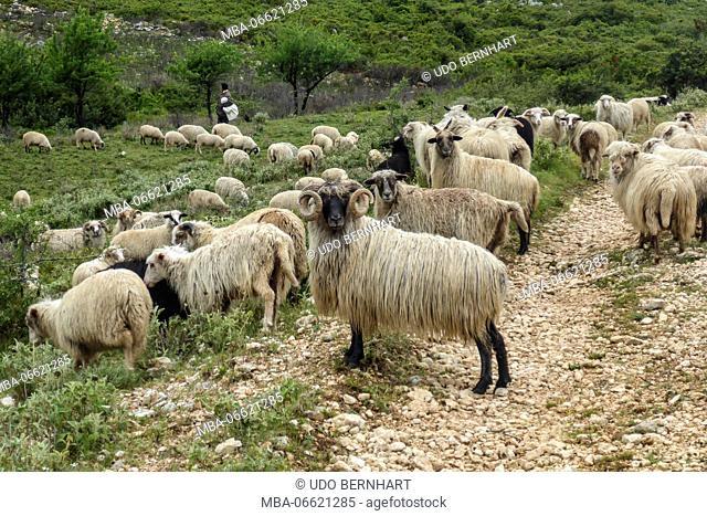 Albania, Balkan Peninsula, Southeast Europe, the republic Albania, trekking, green-blue Albania, Albanian Riviera, coastal trekking, coastal mountains