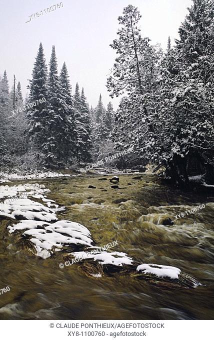 Stream-and-Forest, Québec, Canada