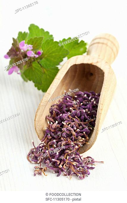 Dried deadnettle flowers on a wooden scoop for making wild herb tea