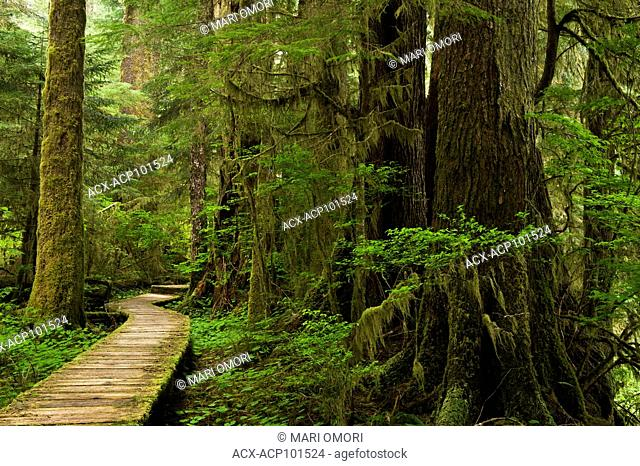 A mossy boardwalk in Carmanah Walbran Provincial Park, British Columbia, Canada