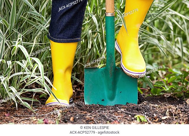 Woman digging in soil with a garden spade, close up view, Winnipeg, Manitoba, Canada