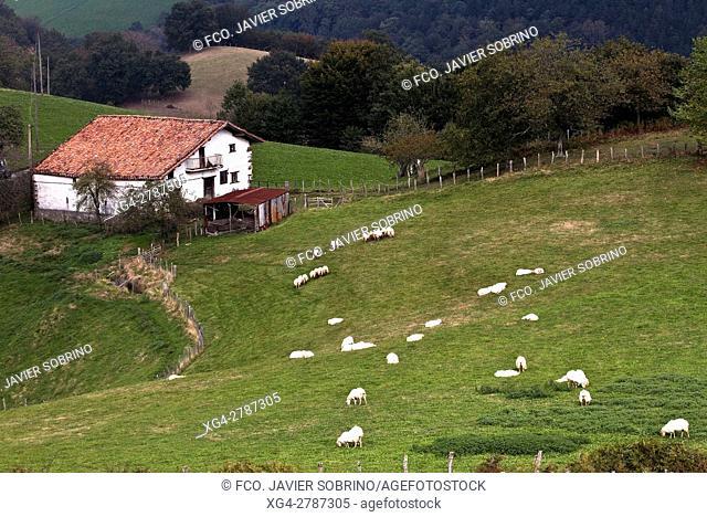 Caserío y ovejas latxas - Orabidea. Baztán - Navarra. Pirineos. Spain