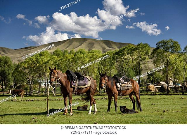 Horses tethered to a shovel with dogs cow and Saty village Kazakhstan