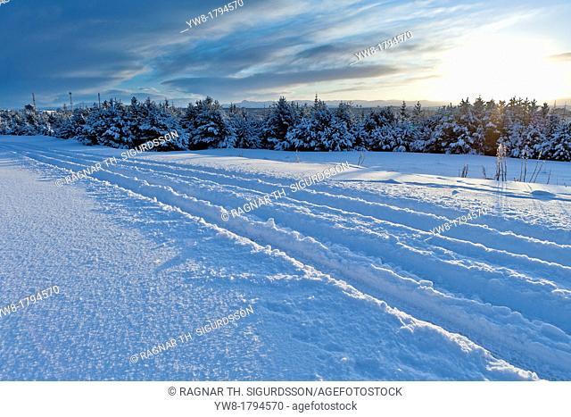 Tracks, Winter, Reykjavik, Iceland