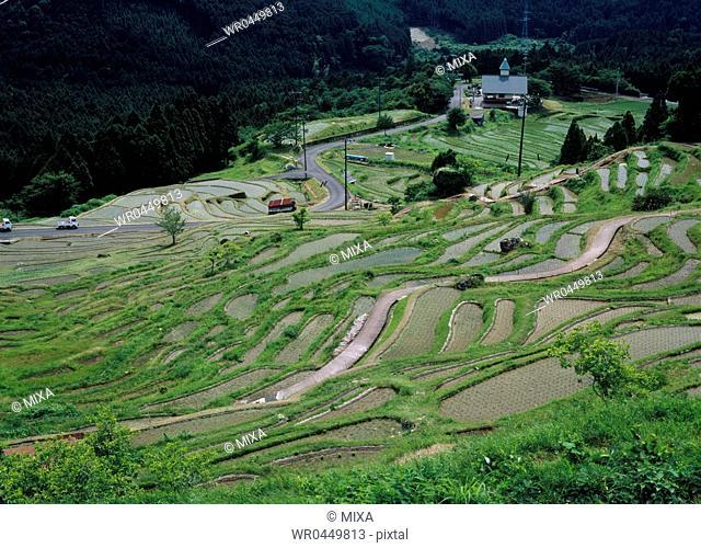 Maruyama Senmaida, Kumano, Mie, Japan