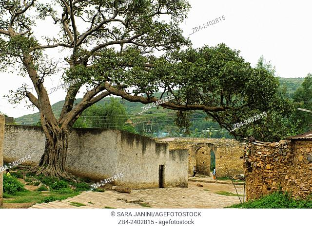 Streets of old Town, Harar, town listed as World Heritage by UNESCO, Ethiopia, Africa