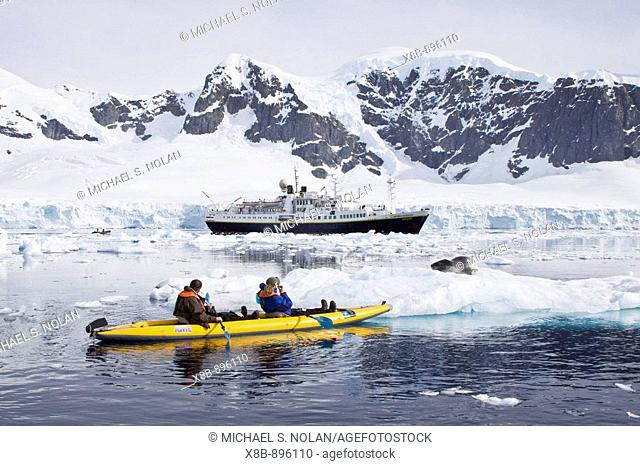 National Geographic photographer Joel Sartore and his wife Kathy kayaking with a leopard seal near Danco Island, Antarctica