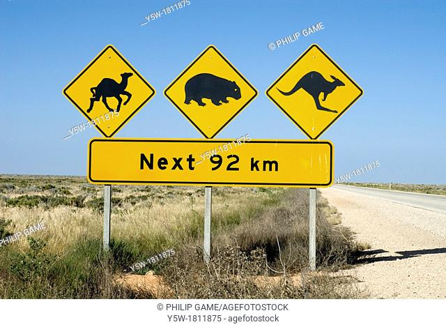 Road sign on the Eyre Highway near the W A  border warns of stray feral camels, kangaroos and wombats  Nullarbor Plain, South Australia