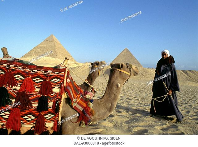 A camel driver and camels in front of the pyramids of Cheops, Chephren and Menkaure, Giza Plateau (UNESCO World Heritage List, 1979), Egypt