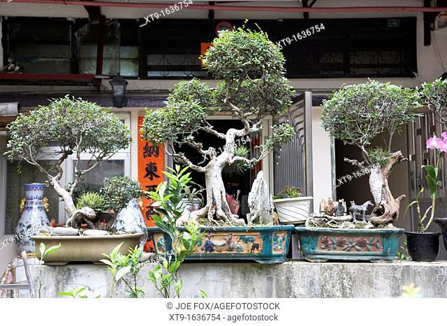 bonsai trees outside a traditional chinese house in pai tau village sha tin hong kong hksar china asia