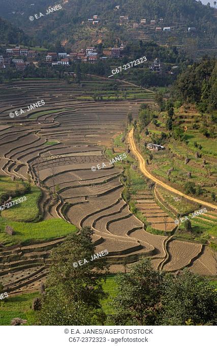 Cultivation terraces at Balthali village 40 kilometres from Kathmandu Nepal
