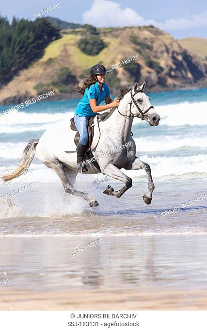 Thoroughbred. Young woman galloping on a gray mare on a beach. New Zealand